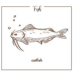 catfish sketch fish icon of sheatfish vector image vector image