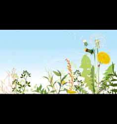 spring meadows background vector image vector image