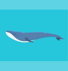 Whale north surface deep vector