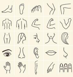 Human body icons vector