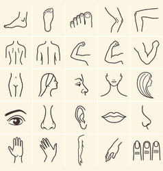 Human body icons vector
