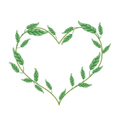 Branch of Green Vine Leaves in Heart Shape vector image