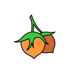 Hazelnut simple color cartoon vector image