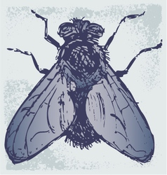Black flies vector image