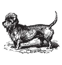 Dandie dinmont terrier vintage vector