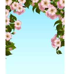 Apple blossom frame vector image