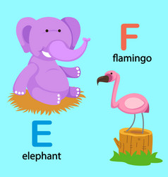 isolated alphabet letter e-elephant f-flamingo vector image
