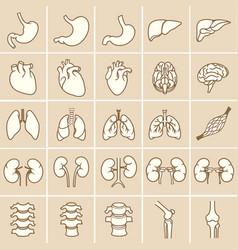 Internal human organs yellow vector