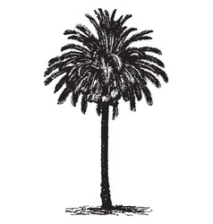 Date palm vintage vector