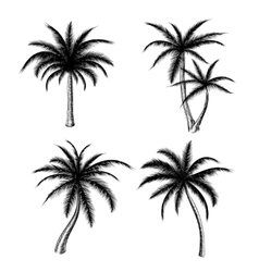 Hand drawn palm trees sketch set vector