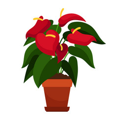 anthurium houseplant in flower pot vector image