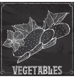Chalk drawing of cucumbers vector