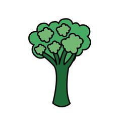 Colorful vegetable broccoli icon vector