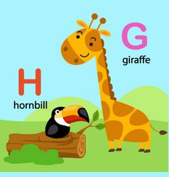 isolated alphabet letter g-giraffe h-hornbill vector image
