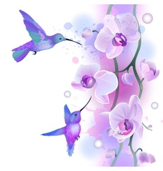Seamless ornament with orchids and humming birds vector image