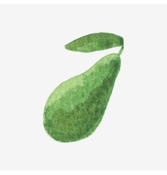 Watercolor or aquarelle avocado vector