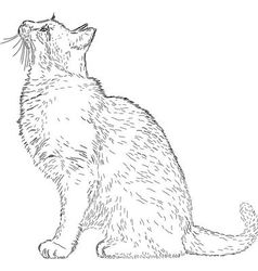 Cat drawing vector image