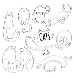 Cats collection vector image vector image