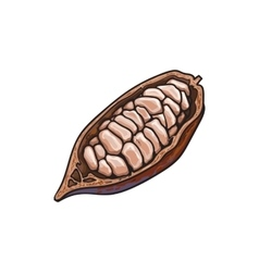 Half of ripe cacao fruit with cocoa beans inside vector image vector image