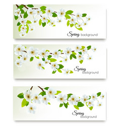 Three spring nature banners with blossom of vector