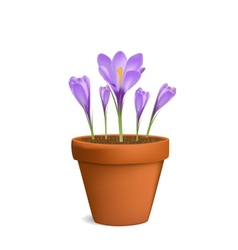 Crocuses in flowerpot vector