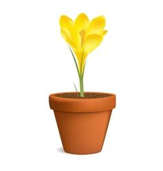 Crocuses in flowerpot vector image