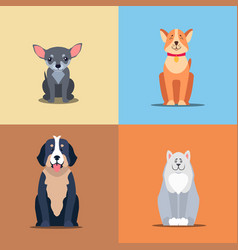 cute purebred dogs cartoon flat icons set vector image vector image