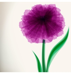 Purple transparent flower vector image vector image
