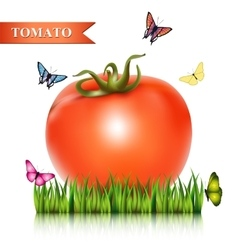 Red fresh tomato on the grass vector image