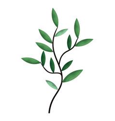 leafs plant decorative icon vector image