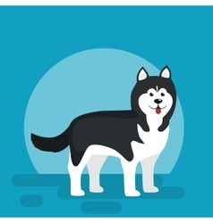Isolated black and white young husky dog vector