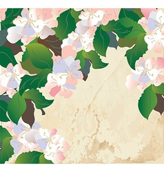 Apple blossom card with paper texture vector