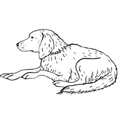 stylized dog line art artistic animal silhouette vector image vector image