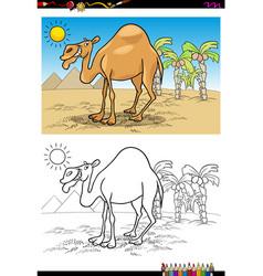 cartoon camel on desert coloring book vector image