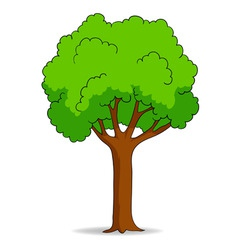 cartoon tree isolated on white background vector image vector image