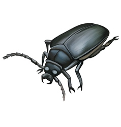 Black beetle vector