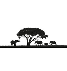 black silhouette of elephants in savannah vector image vector image