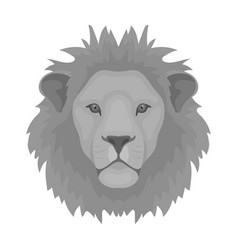 lion icon in monochrome style isolated on white vector image vector image