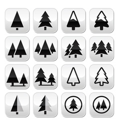 Pine tree buttons set vector image