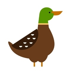 Drake duck vector