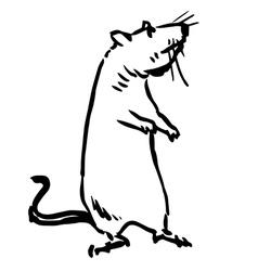 Rat mouse vector