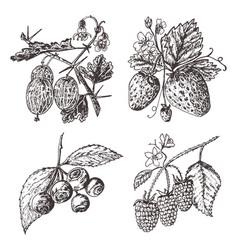 set berries raspberry blueberry strawberry vector image