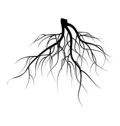 Tree underground roots set vector
