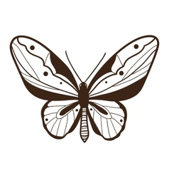 Abstract graphic butterfly isolated on white vector image vector image
