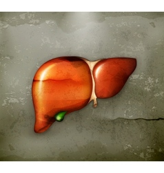 Human liver old-style vector