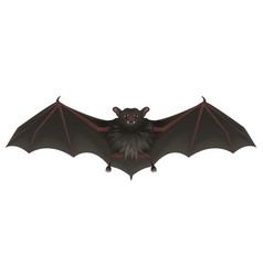 bat vampire with sharp teeth spread its wings vector image vector image