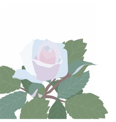 Watercolor delicate rose isolated vector