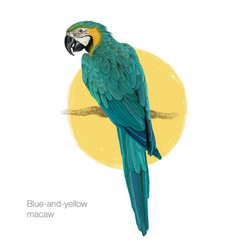 blue-and-yellow macaw hand drawn painting vector image vector image