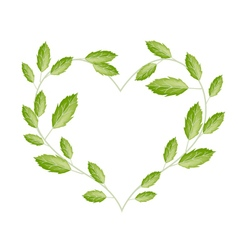 Green vine leaves in a beautiful heart shape vector