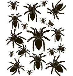 Set Spider Silhouette vector image vector image